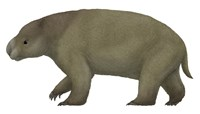 Diprotodon, the Largest know Marsupial Fine Art Print
