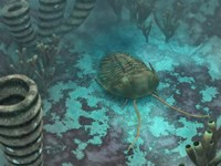 An Olenoides Trilobite Scurries across a Middle Cambrian Ocean Floor by Walter Myers - various sizes