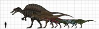 Spinosauridae Size chart by Vitor Silva images - various sizes