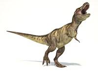 Tyrannosaurus Rex Dinosaur on White Background Fine Art Print