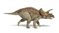Triceratops Dinosaur on White Background Fine Art Print