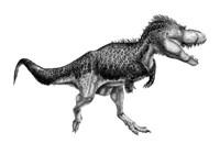 Black Ink Drawing of Albertosaurus Sarcophagus Fine Art Print