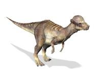 3D Rendering of a Pachycephalosaurus Dinosaur by Leonello Calvetti - various sizes