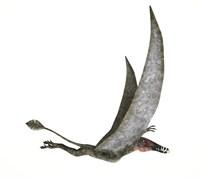 Dorygnathus Flying Dinosaur by Leonello Calvetti - various sizes
