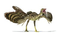 Archaeopteryx Dinosaur by Leonello Calvetti - various sizes