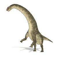 Titanosaurus Dinosaur on White Background by Leonello Calvetti - various sizes