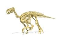 3D Rendering of an Lguanodon Dinosaur Skeleton by Leonello Calvetti - various sizes