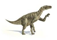 Iguanodon Dinosaur in Dynamic Posture by Leonello Calvetti - various sizes