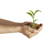 Man's Hands Holding Soil with a Little Growing Green Plant by Leonello Calvetti - various sizes, FulcrumGallery.com brand