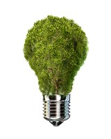 Light Bulb with Tree Inside glass, Isolated on White Background by Leonello Calvetti - various sizes