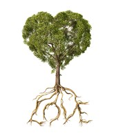 Tree with Foliage in the Shape of a Heart Fine Art Print