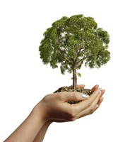 Woman's Hands Holding Soil with a Tree by Leonello Calvetti - various sizes