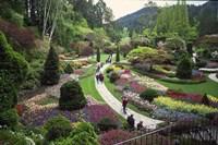 Tulips, Butchart Gardens, Victoria, British Columbia, Canada Fine Art Print