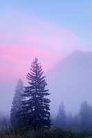 Canada, British Columbia, Mount Robson Park Foggy sunrise by Jaynes Gallery - various sizes - $37.49