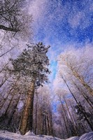 Let it snow by Philippe Sainte-Laudy - various sizes