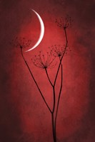 Red Crescent Moon Fine Art Print