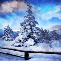 My Beautiful Fir Tree by Philippe Sainte-Laudy - various sizes - $20.99