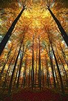 Beginning of Autumn Fine Art Print