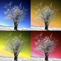 Four X One by Philippe Sainte-Laudy - various sizes