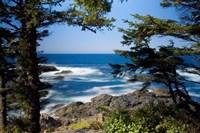 Wild Pacific Trail, Vancouver Island British Columbia Fine Art Print