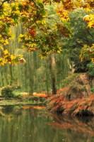 Colorful Fall Leaves at Butchart Gardens, Victoria, British Columbia, Canada Fine Art Print