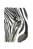 Zebra Eye Fine Art Print