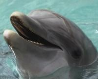 Dolphin - up close Fine Art Print