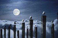 Seagulls Perched on Wooden Posts under a Full Moon Fine Art Print