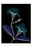 """Mandelilla Whispers by Albert Koetsier - 13"""" x 19"""""""