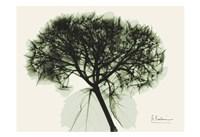 Verduous Hydrangea 1 Fine Art Print