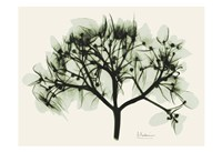 "Verduous Hydrangea 2 by Albert Koetsier - 19"" x 13"""