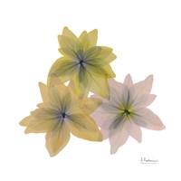 "Starburst Flora by Albert Koetsier - 13"" x 13"""