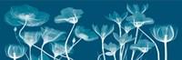 """Transparent Flora B by Albert Koetsier - 18"""" x 6"""""""