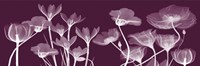 "Transparent Flora C by Albert Koetsier - 18"" x 6"""