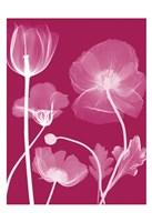 """Transparent Flora 13 by Albert Koetsier - 13"""" x 19"""""""