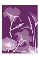"""Transparent Flora 10 by Albert Koetsier - 13"""" x 19"""""""