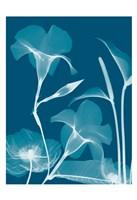 """Transparent Flora 14 by Albert Koetsier - 13"""" x 19"""""""