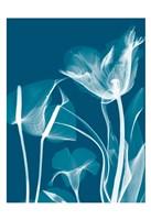 """Transparent Flora 11 by Albert Koetsier - 13"""" x 19"""""""