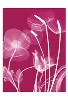 """Transparent Flora 12 by Albert Koetsier - 13"""" x 19"""""""