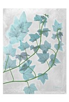"Ivy Blues by Albert Koetsier - 13"" x 19"""