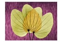 "SoHo Orchid 2 by Albert Koetsier - 19"" x 13"""