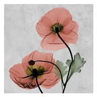 "13"" x 13"" Poppies Art"