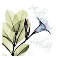 "Live Mandelilla by Albert Koetsier - 13"" x 13"", FulcrumGallery.com brand"