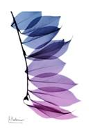 """Camelia Leaf In Purple by Albert Koetsier - 13"""" x 19"""""""