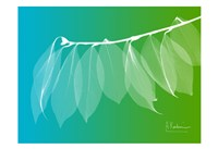 "Camelia Leaf Green Blue 1 by Albert Koetsier - 19"" x 13"""