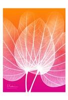 """Orchid Tree Pink Orange 1 by Albert Koetsier - 13"""" x 19"""""""