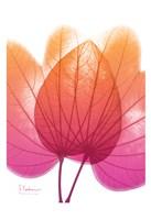 """Orchid Tree Pink Orange 2 by Albert Koetsier - 13"""" x 19"""""""