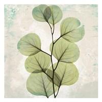 Eucalyptus Aged Stone Fine Art Print