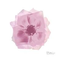 "Rose Petals by Albert Koetsier - 13"" x 13"""