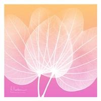 "Orchid Tree Pink 1 by Albert Koetsier - 13"" x 13"""